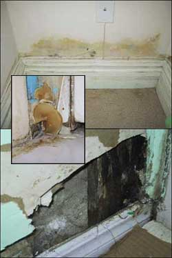 excess moisture signs of mold in the basement